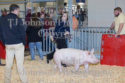 2018 KISD Swine Show Class 4