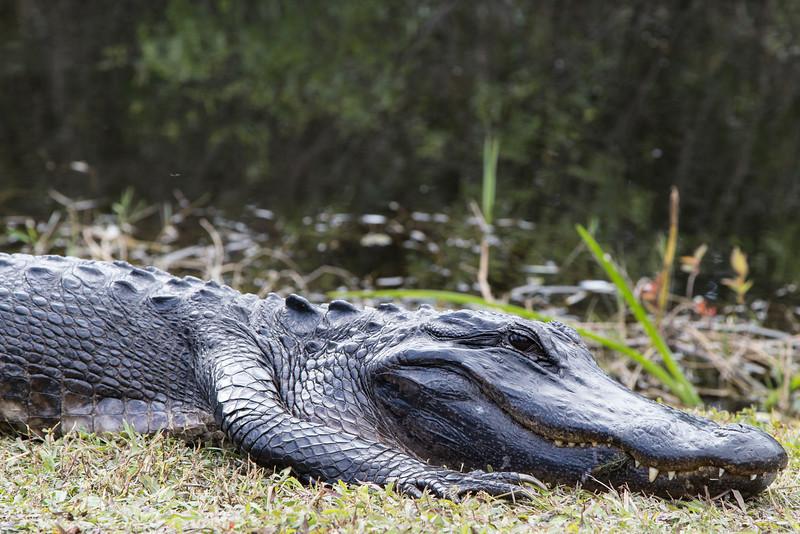 Everglades NP-0361-Select_E.jpg