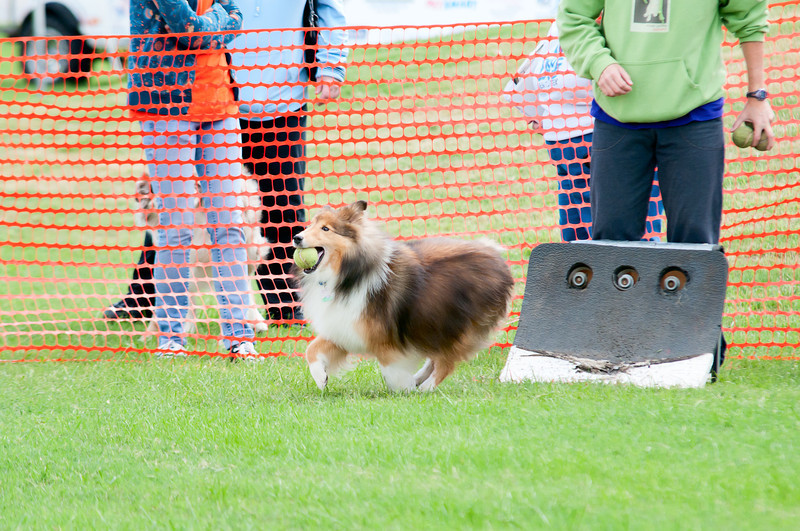 2011 Bark in the Park-175.jpg