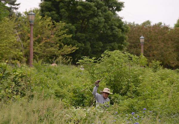 Elmhurst Prairie Cleanup