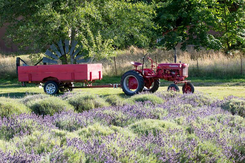 Evergreen Lavender Farm-50.JPG