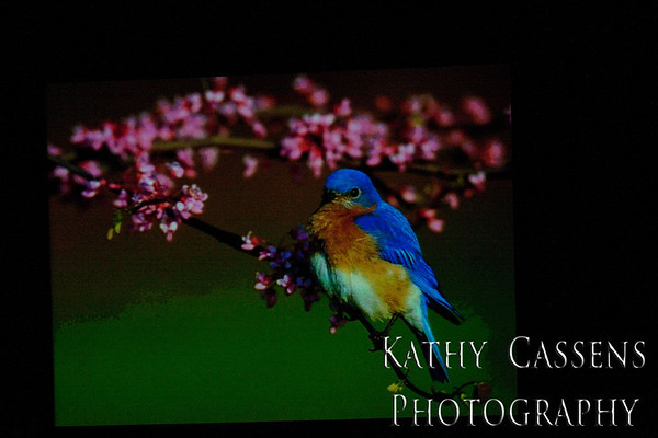 State Bird, Bluebird