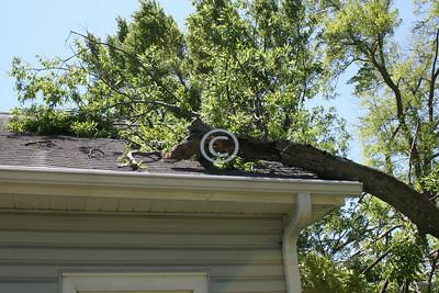The tree versus my house