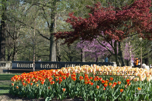 Spring in Tower Grove Park