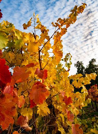 Fall Color, California Style