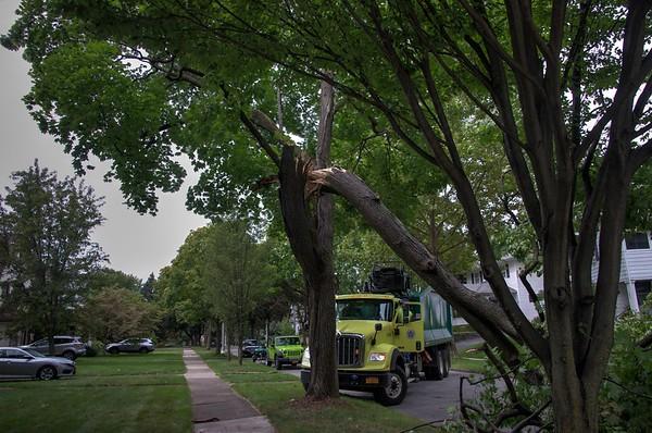20200907 Tree Damage