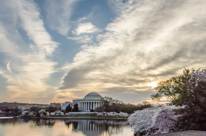 Cherry Blossom Tidal Basin Early Morning -13.jpg