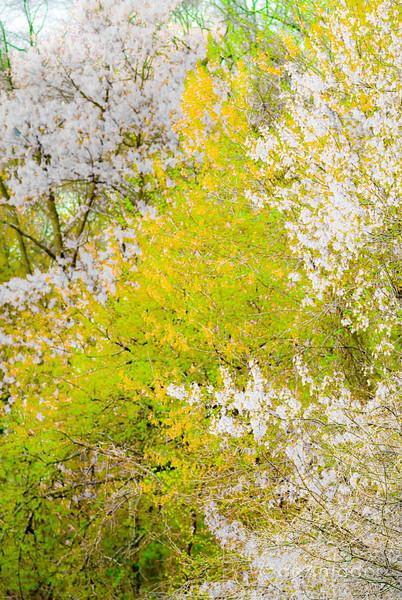 Spring Drive.jpg