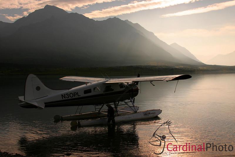 Alaska 2006 Safari Highlights