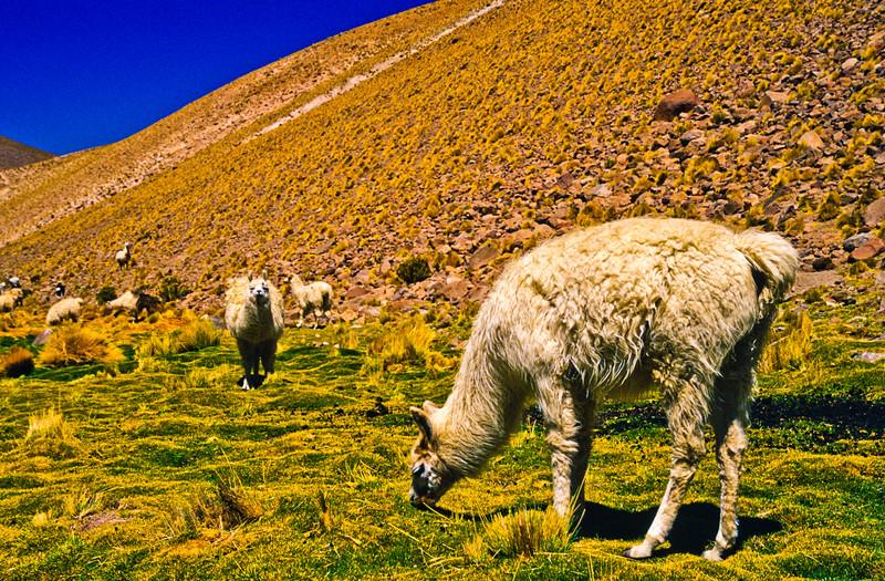 Chile-4.jpg