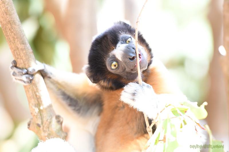 Madagascar 2017 (29)