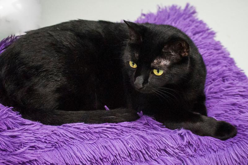20140423SCPA midnight black cat  18.jpg