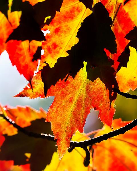 20170912 Fall Leaves-0114 edited.jpg