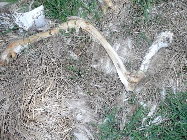 Deer Skeleton & Misc