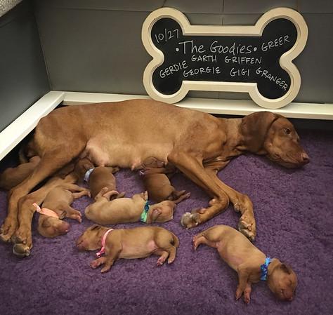The Goodies (Teak x Zene) - Newborn to 2 weeks