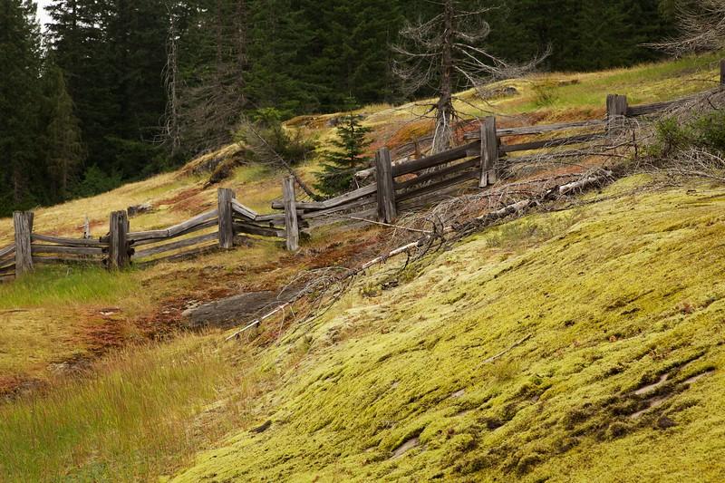 Split rail fence and moss covered rock. Box Canyon area. Mt Rainier National Park, Washington.