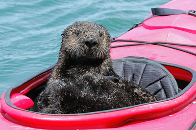 Monterey Bay/Elkhorn Slough