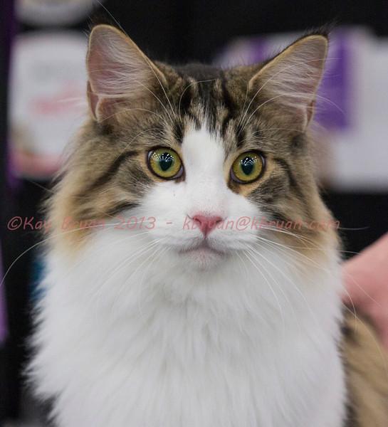 CatShow2014140.jpg