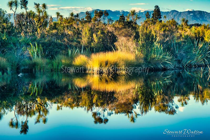 Foliage reflectios