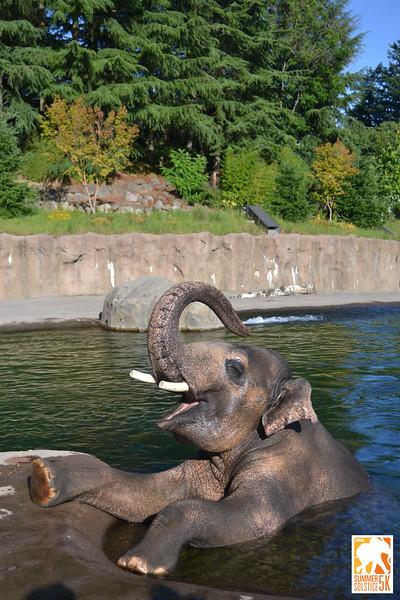 Anzelina-Coodey_Solstice-Run-Oregon-Zoo_009.jpg