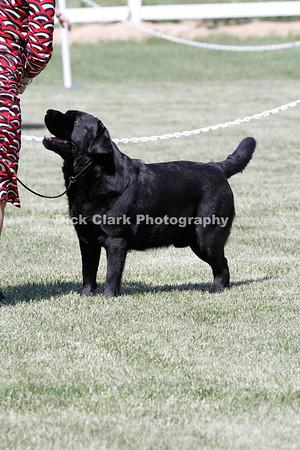 Friday - Open, Dog, Black