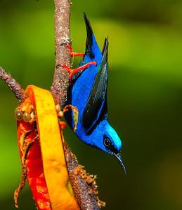 Costa Rica - Jan