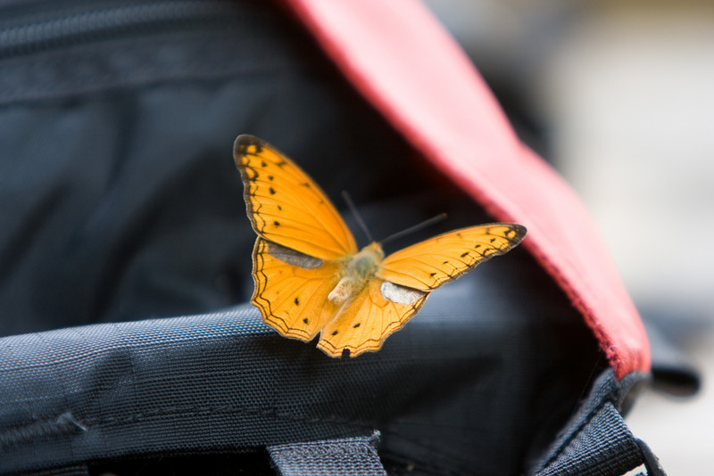 Butterfly on Bill's backpack.