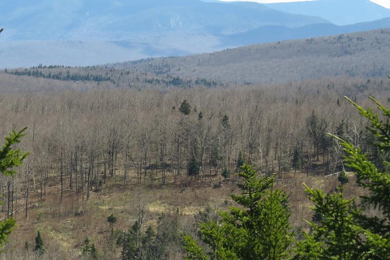 Now those are nice woods.JPG