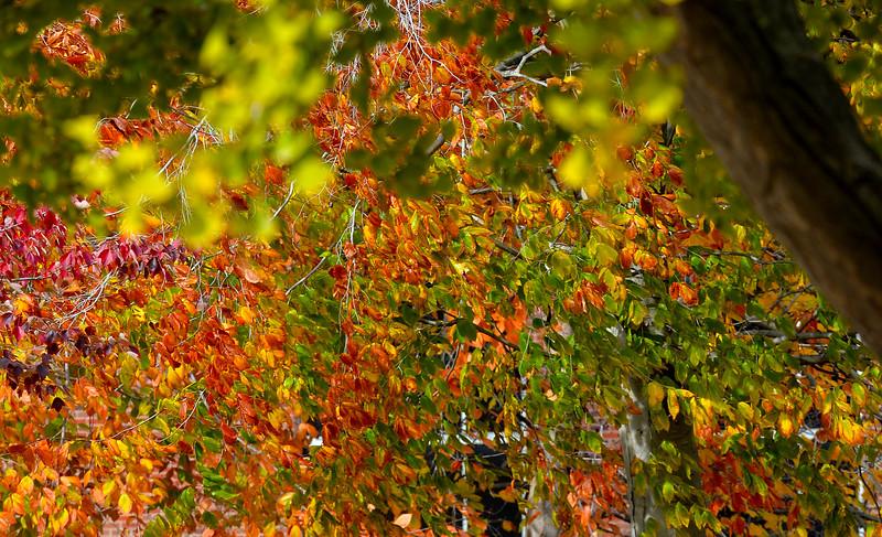 leaves3167.jpg