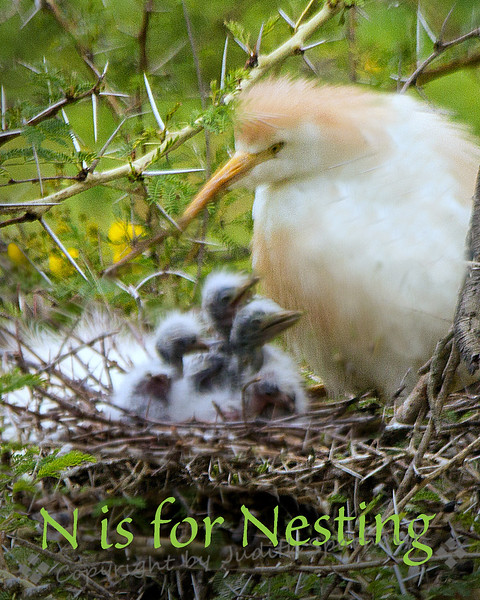 N is for Nesting