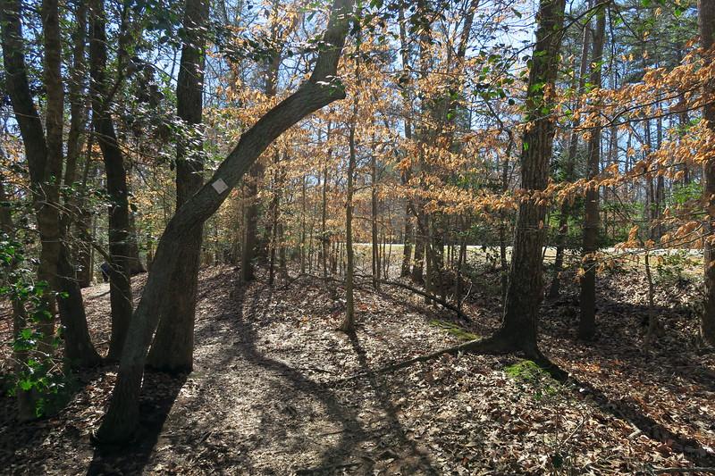 Lakeshore Loop Trail