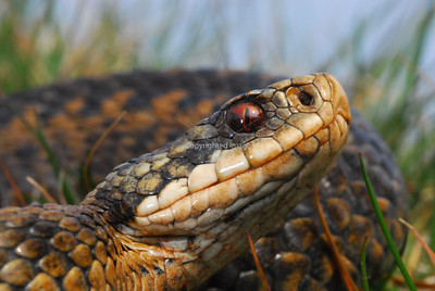 Adder Project