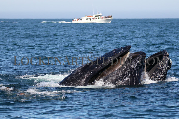 Whale Watching April 2019
