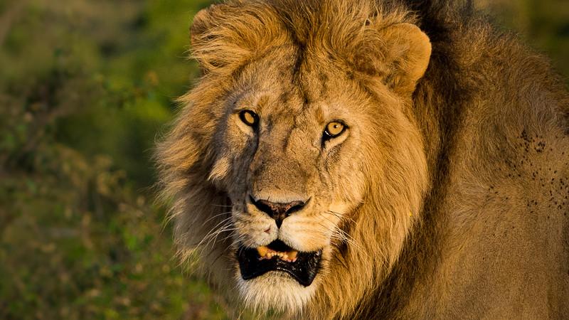 Lions-0103-2.jpg
