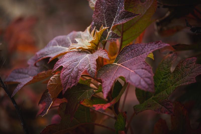 FallFoliage-1.jpg