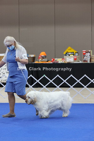 CSCA Regional Specialty Veteran Dogs 7-9 Years