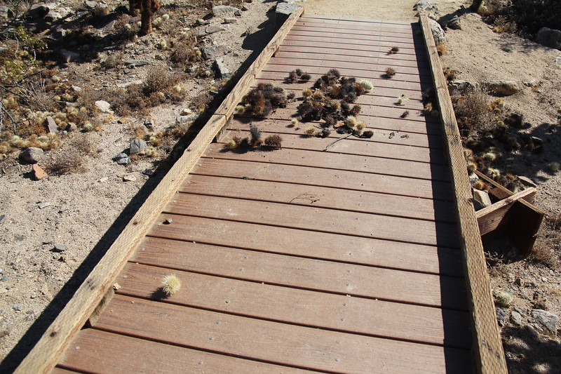 20190524-33-SoCalRCTour-Cholla Cactus Garden Trail-Joshua Tree NP.JPG