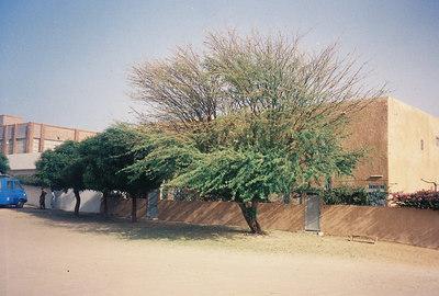 Mauritania 15: Plague of locusts (2004)
