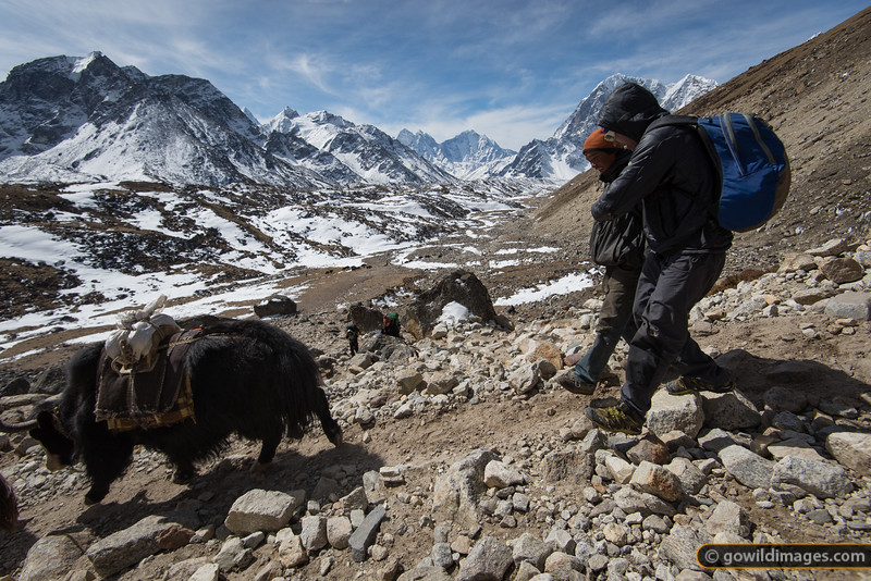 Yak herders take a casual stroll back down the valley after having delivered their loads to base camp