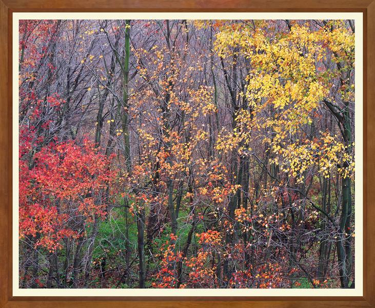 JW 1149 fall trees WIDE FRAME.jpg