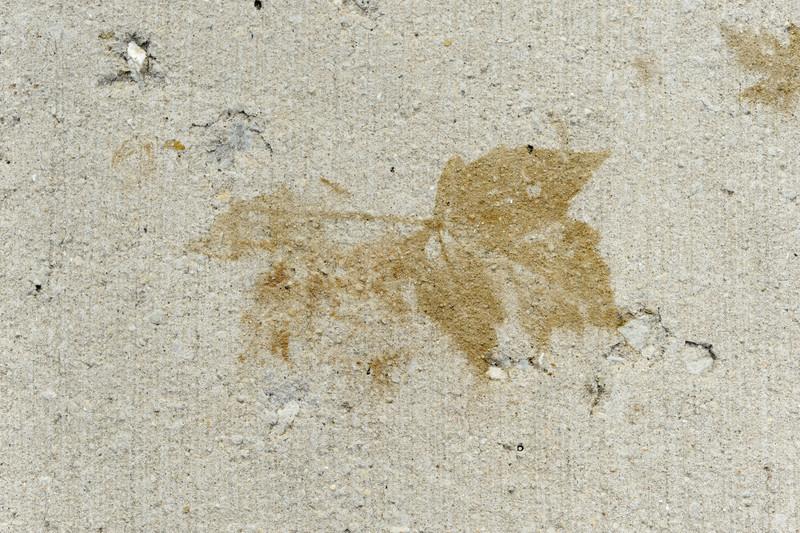 Leaf-6871.jpg