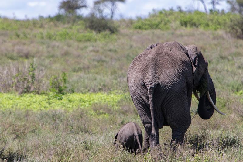 Africa 19 Jpegs_244.JPG