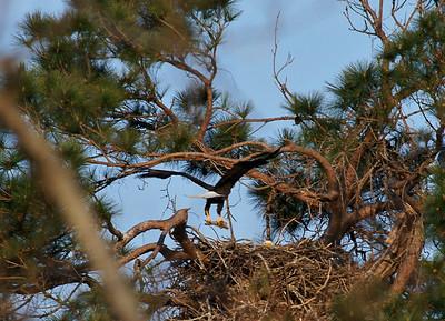 Baytown Bald Eagles 2010