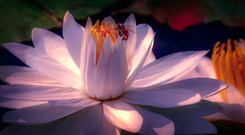 Lily and Honey Bee - 18.jpg