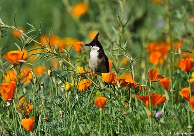 Birds of Spring 2016
