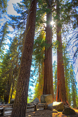 Sequoia and Kings National Park