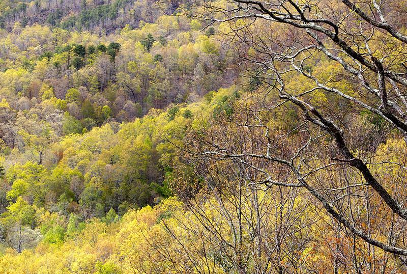 Spring - North Carolina (Blue Ridge Parkway)