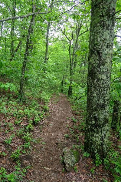 Mountains-to-Sea Trail -- 3,160'