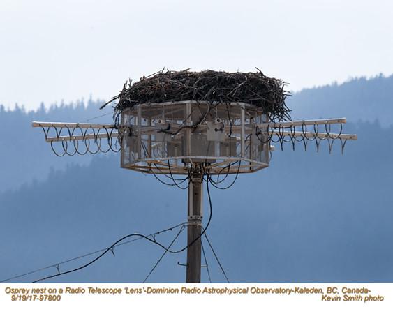 Osprey nest on Radio Telescope Lens 97800.jpg
