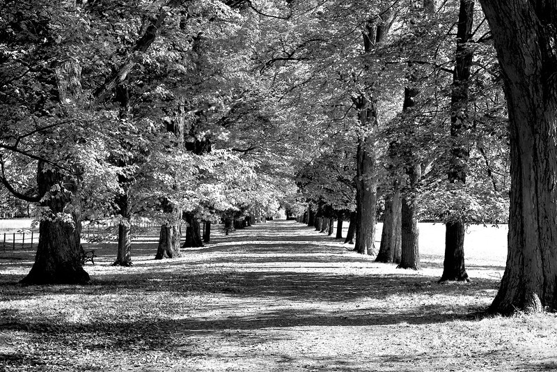 _hyde park if MG_1912 copy.jpg